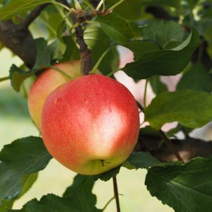 apple-2711629_1920