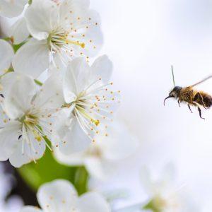 honey-2222228_1920